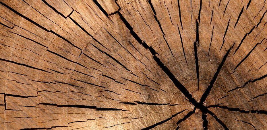 bandeau dureté bois